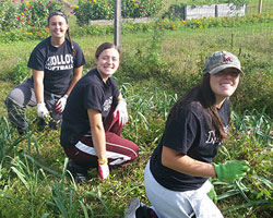 Molloy students working at the Homecoming Garden