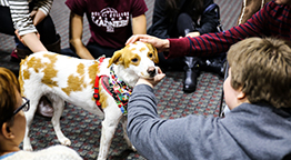 Student Solution Center: Pet Therapy