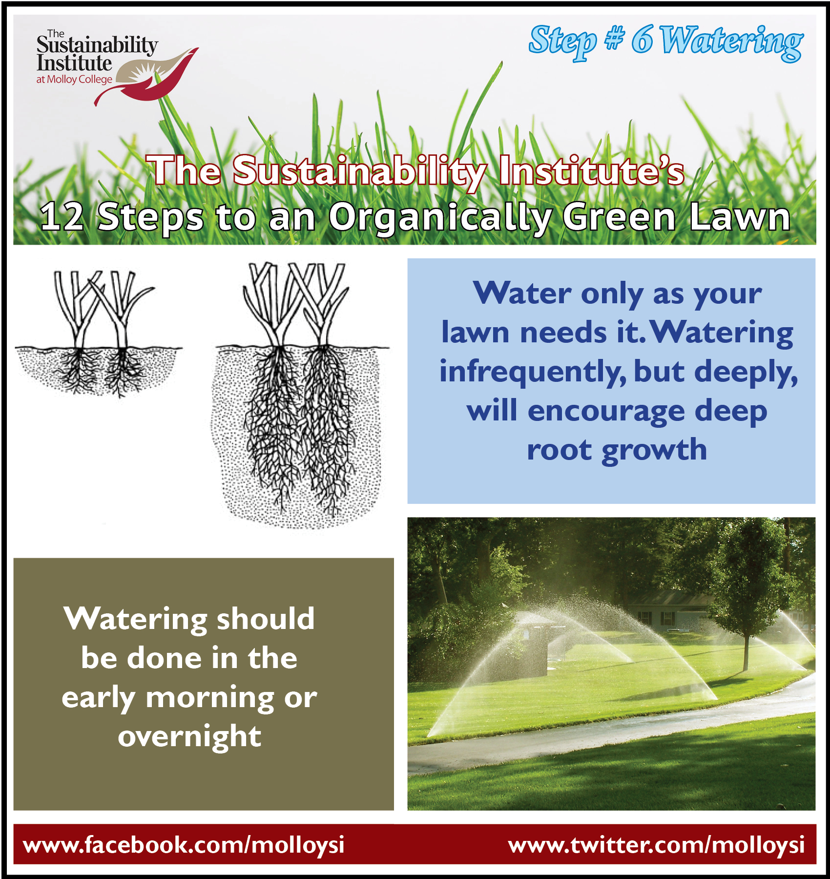 Molloy College: Step 6 - Watering — Is your lawn dying of