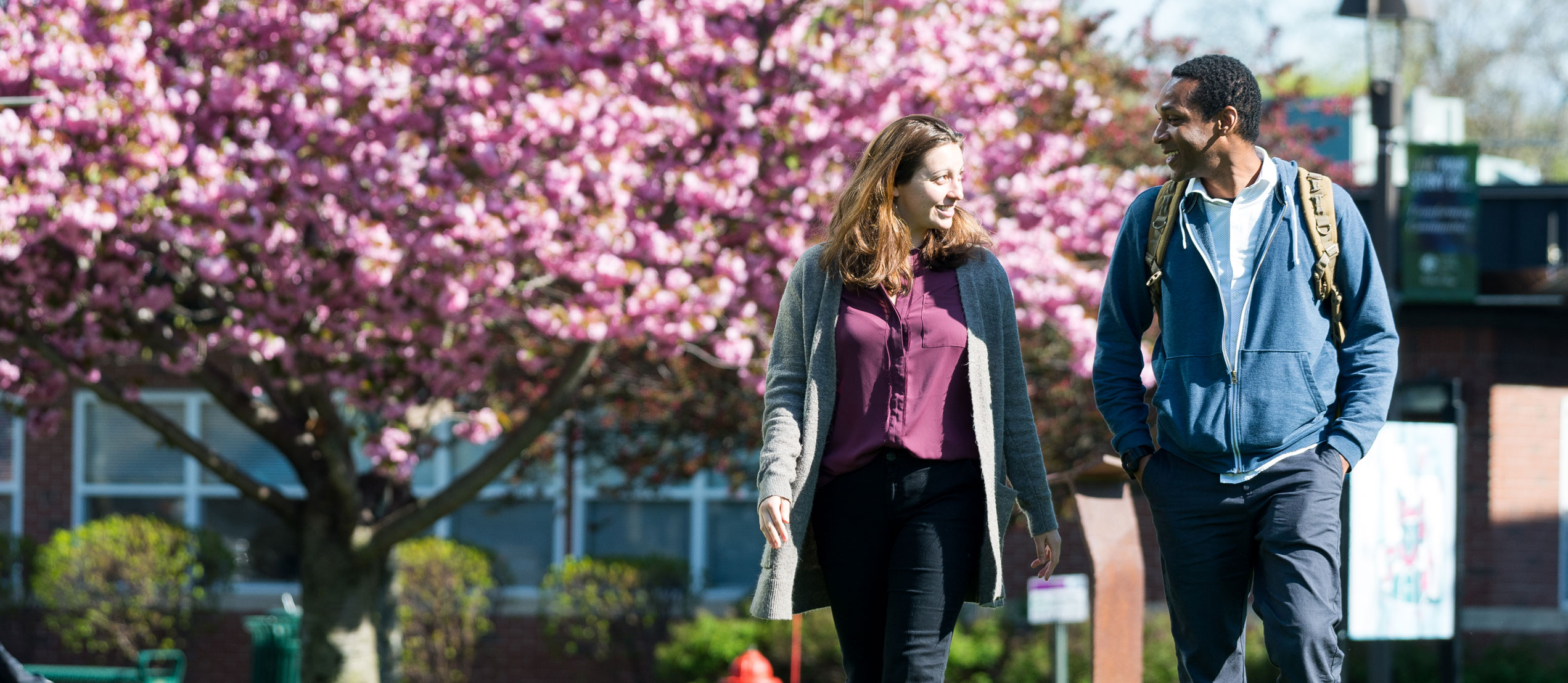 Molloy College: Affordable undergraduate and graduate degree
